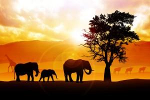 safari single reizen